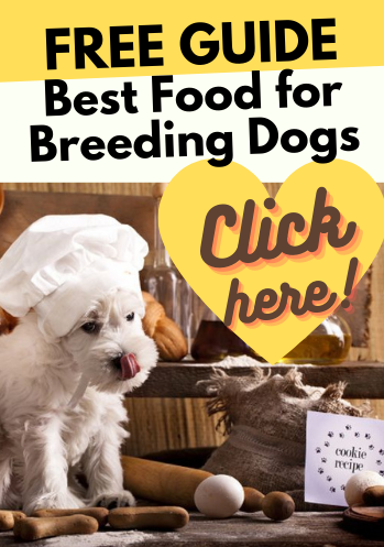 best-food-for-breeding-dogs